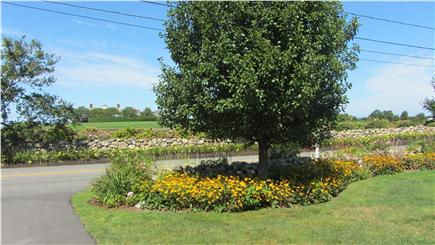 East Dennis Cape Cod vacation rental - Mature trees and view of yard