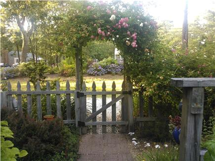 Eastham Cape Cod vacation rental - Rose covered trellis from side yard