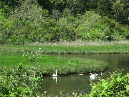 South Orleans Cape Cod vacation rental - Tar Kiln Marsh, at end of road, .3 miles