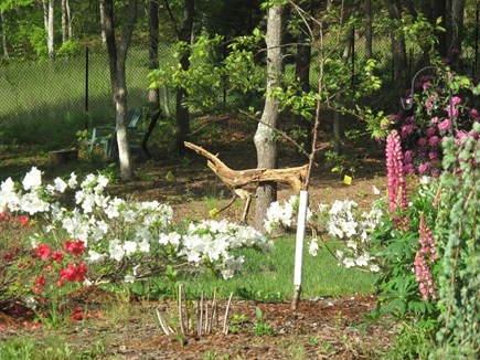 South Orleans Cape Cod vacation rental - Backyard flower gardens