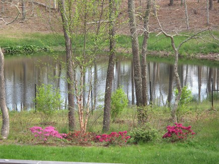 South Orleans Cape Cod vacation rental - Backyard lawn view of 'red hawk' pond