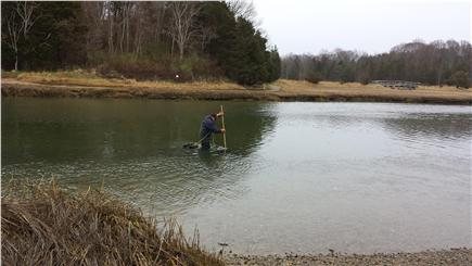 Eastham Cape Cod vacation rental - Shellfishing at nearby Salt Pond (by permit from town hall)