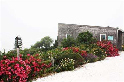 Truro Cape Cod vacation rental - Beautiful landscaping, big driveway, house tucked away!