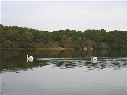 Chatham Cape Cod vacation rental - White Pond!