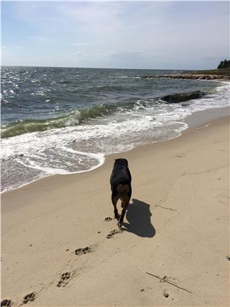 Chatham Cape Cod vacation rental - Strolling on Forest Beach with Gretchen