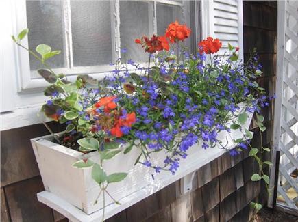 Dennisport Cape Cod vacation rental - Window Box