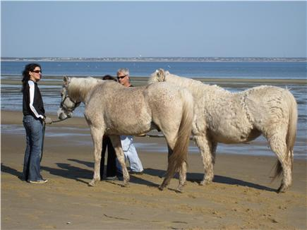 Provincetown Cape Cod vacation rental - Horses on the beach below deck