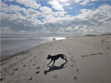 East Orleans Cape Cod vacation rental - Nauset Beach, just 6/10's of a mile away