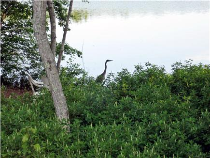 Harwich Cape Cod vacation rental - Great bird watching from the deck
