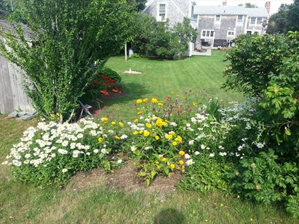 Harwich Port Cape Cod vacation rental - Backyard
