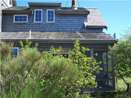 Truro Cape Cod vacation rental - Front of cottage, with black pine, forsythia and olive tree