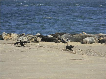 Harwich Cape Cod vacation rental - A variety of wildlife can be seen all summer & fall