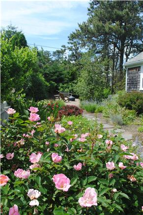 South Chatham Cape Cod vacation rental - Front Garden