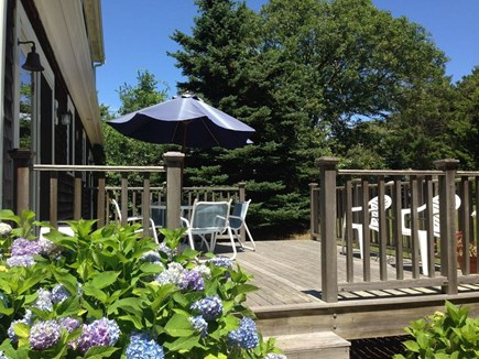 South Chatham Cape Cod vacation rental - Sunbathe in this glorious private setting, walk to beaches.