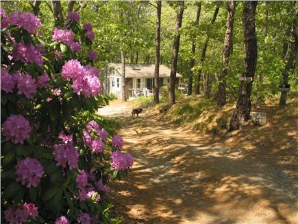 Wellfleet Cape Cod vacation rental - Cassick Valley Rd.