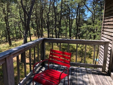 Wellfleet Cape Cod vacation rental - Look at all that woods
