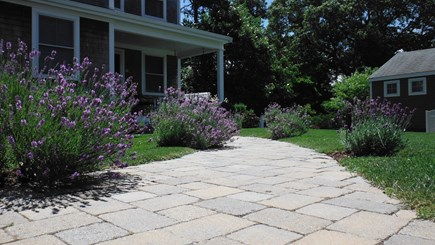 Dennis Cape Cod vacation rental - Front Walkway lined with Lavender