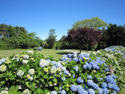 Orleans Cape Cod vacation rental - Beautiful yard with hydrangeas.