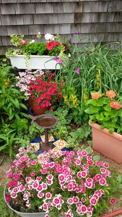 North Truro Cape Cod vacation rental - Flower Gardens surround the cottage