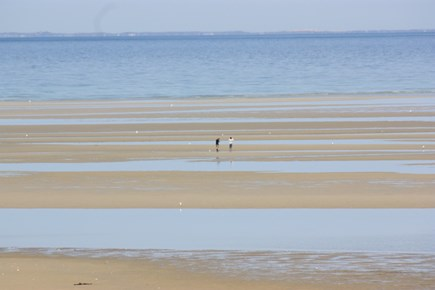East Brewster Cape Cod vacation rental - Brewster flats.  Walk for miles at low tide.