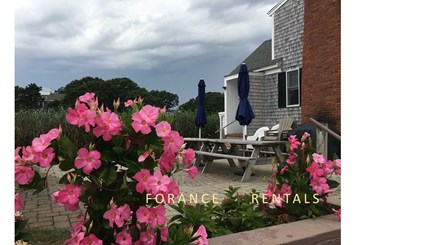 Hyannis Cape Cod vacation rental - Plants around the patio are bright spots no matter what the day.