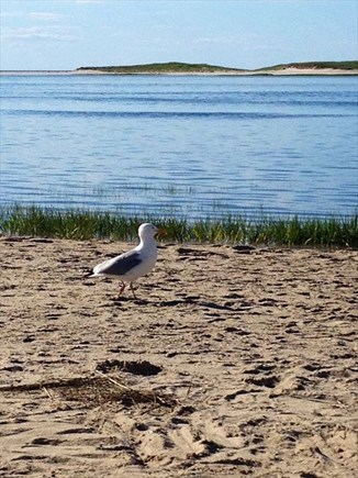 Yarmouthport Cape Cod vacation rental - Beach