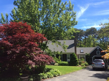 Eastham Cape Cod vacation rental - When you see the Maple tree you know you've arrived home