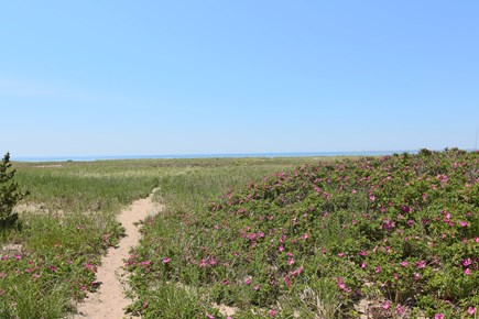 Provincetown--Beach Point Cape Cod vacation rental - Path through dunes to beach--partial boardwalk and sand