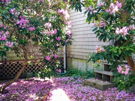 Dennis Cape Cod vacation rental - Easy access to natural beauty & historic charm