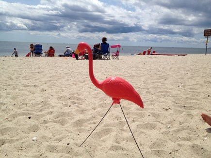 West Dennis Cape Cod vacation rental - Fernando enjoying West Dennis Beach!