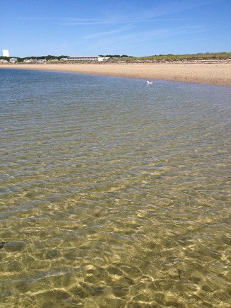 Beach Point / North Truro Cape Cod vacation rental - Knee deep on the sandbar