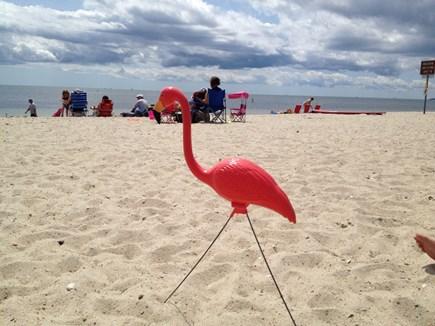West Dennis Cape Cod vacation rental - Fernando likes the sand at West Dennis Beach!