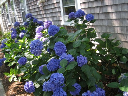 Brewster Cape Cod vacation rental - Gardens