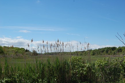 East Sandwich Cape Cod vacation rental - Marshes alongside neighborhood