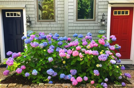New Seabury, Mashpee New Seabury vacation rental - Head for the blue door!