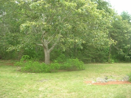 Yarmouth Port Cape Cod vacation rental - Back yard backed to conservation land