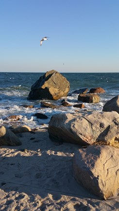 Brewster Cape Cod vacation rental - Seagull flying over Glacial Rocks on Sea Street Beach