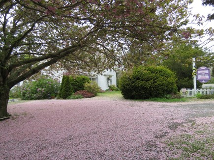 Eastham Cape Cod vacation rental - Pink carpet of blossoms in May at entrance from/exit to Route 6