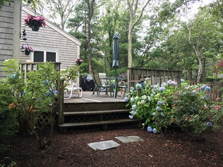 Mashpee Cape Cod vacation rental - Deck and beautiful Hydrangeas