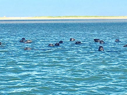 Chatham (in town) Cape Cod vacation rental - Admire the seals from the Chatham Fish Pier & Shore Rd
