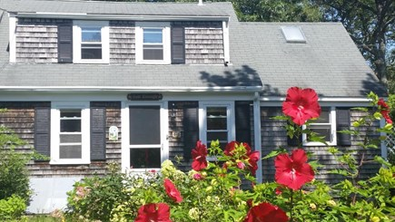 Chatham, Near downtown Cape Cod vacation rental - Late summer hibiscus