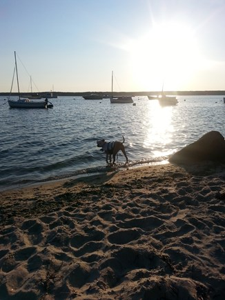 Falmouth Cape Cod vacation rental - Dog friendly