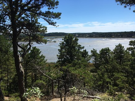 South Wellfleet Cape Cod vacation rental - View along our backyard conservation trail.