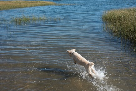 South Wellfleet Cape Cod vacation rental - Happy Dogs Welcome
