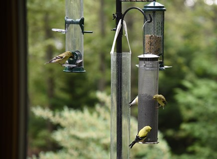 South Wellfleet Cape Cod vacation rental - A bird feeder right outside our sunroom window