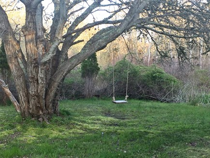 Brewster Cape Cod vacation rental - Tree swing in the back yard