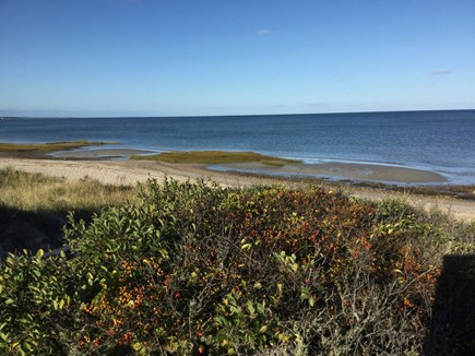 Orleans Cape Cod vacation rental - Shark-free waters on Cape Cod Bay!