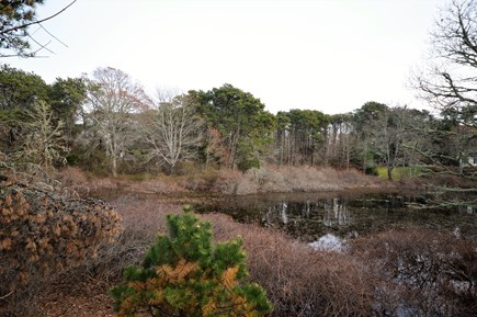 Orleans Cape Cod vacation rental - Peaceful pond behind the home