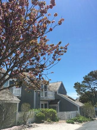 New Seabury, Mashpee New Seabury vacation rental - Front of Townhouse