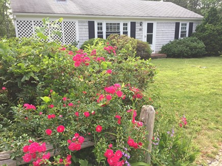 Falmouth Cape Cod vacation rental - Plenty of perennials bloom throughout the summer